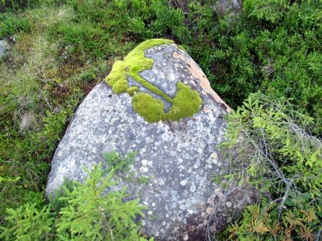 stein mit moos